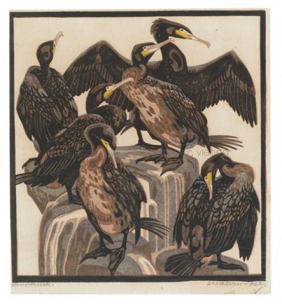 norbertine-bresslern-roth-kormorane
